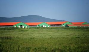 Постройка крупного животноводческого агропромышленного комплекса