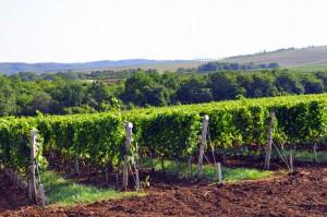 основные отрасли производства растительной продукции