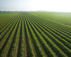 Зеленое обработанное поле