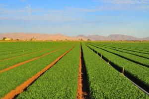 Проведение точного земледелия