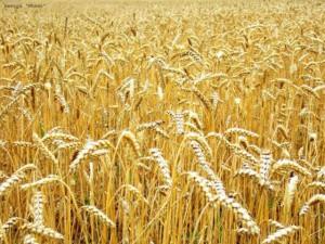 Зерновая продукция