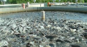 Рыбный бассейн