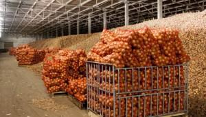 Хранение лука на складе