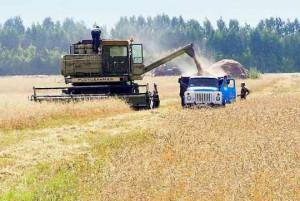 """""""Размещение"""" как форма кооперации в сельском хозяйстве"""