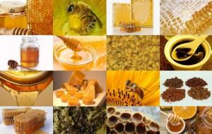Основные тенденции в пчеловодстве