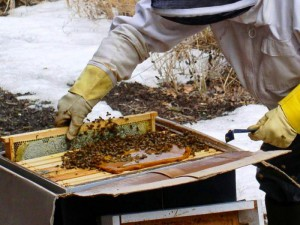 Подкормка пчел в феврале