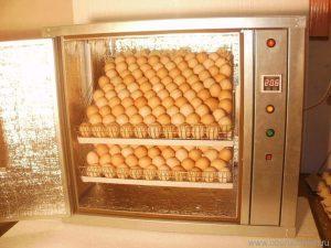 Инкубатор куриных яиц
