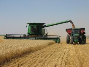 Сбор зернового урожая