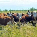 Районы животноводства — территориальные особенности России