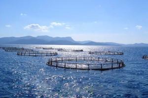 Морской вид садкового рыбоводства
