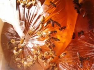 Сахарный сироп для пчел