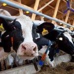 Организация животноводства: основные принципы и перспективы