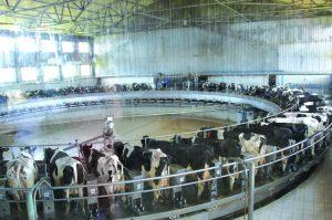 Современные технологии в молочного животноводства