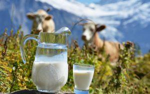 Изготовление молочной продукции