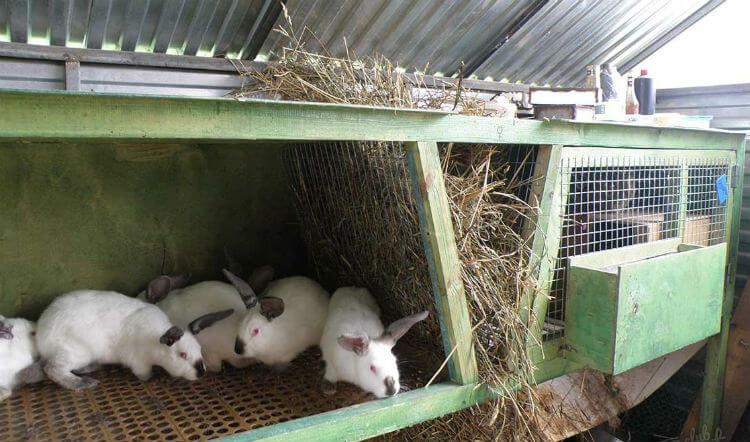 Бизнес выращивание кроликов 15