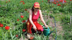Весенняя или осенняя посадка тюльпанов