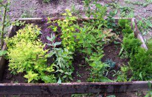 Школка для растений