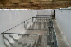 Клетки для содержания свиней