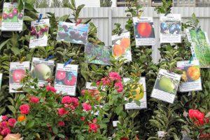 Выбор саженцев плодовых культур