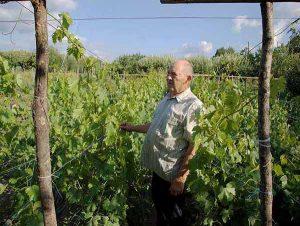 Школки саженцев винограда