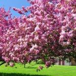 Борьба с вредителями в саду народными средствами