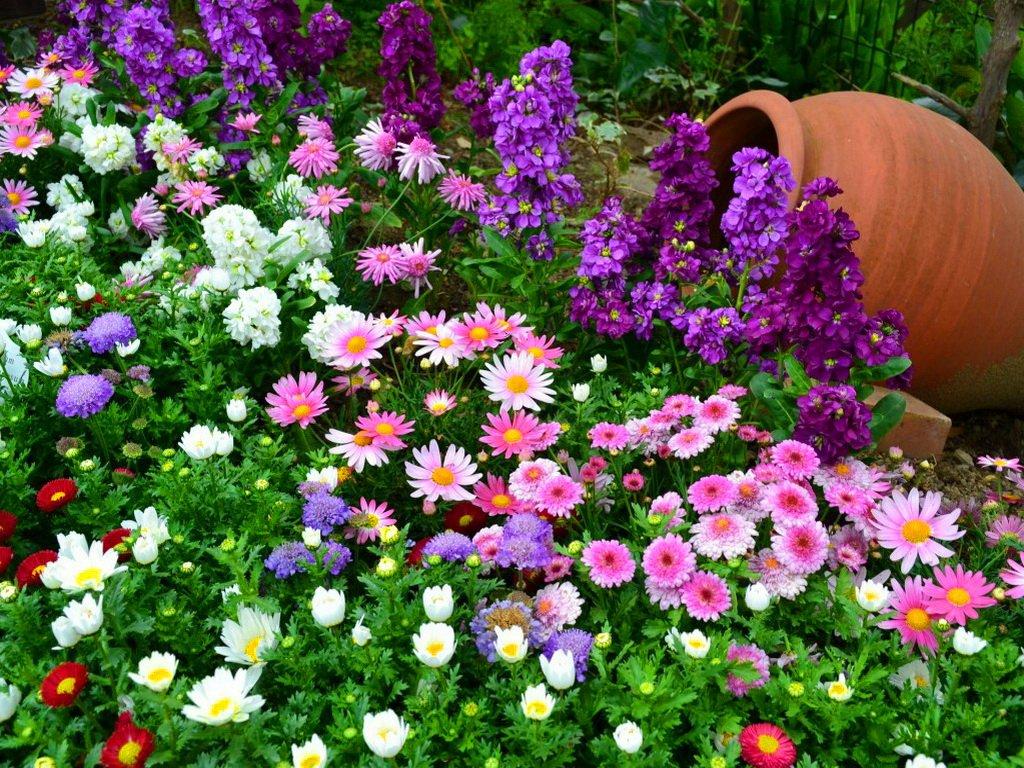 Цветы на клумбе дома
