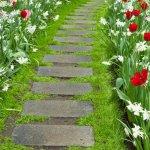 Клумбы рабатки и миксбордеры: особенности выращивания и ухода