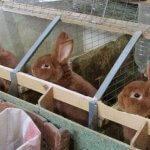 Крольчатник своими руками: особенности и необходимые материалы
