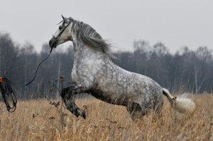 Ухода за лошадьми
