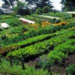 Органическое сельское хозяйство: рентабельность и основные принципы