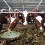 Агрохолдинг «Степь» построит в Ростовской области крупную молочно-товарную ферму