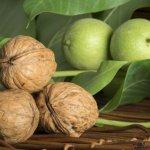 В Ингушетии закладывают сады плодовых экзотических культур
