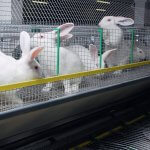 В Ленинградской области при кролиководческом хозяйстве  создается учебный центр животноводства