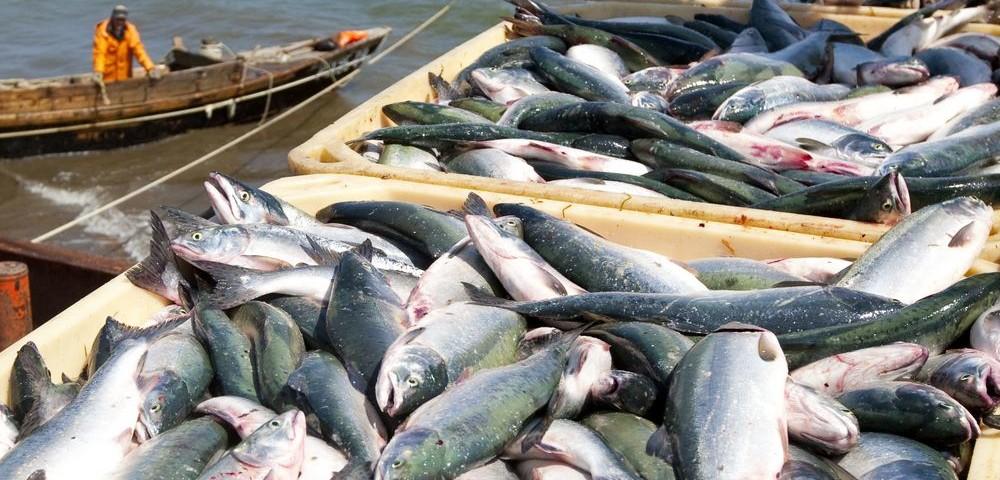 Рыбодобывающая отрасль России