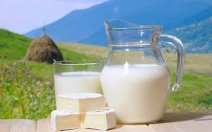Налажено партнерство новгородских и венгерских производителей молочной продукции