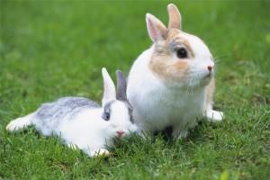 На севере России начнут разводить кроликов