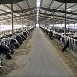 В Краснодарском крае появится новая молочно-товарная ферма
