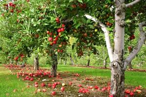 «Разводите сады и ешьте плоды их...»