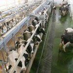 wi-fi  в помощь  Крымскому молочнотоварному комплексу