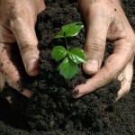 В республике Марий Эл  будет налажено производство ценных удобрений