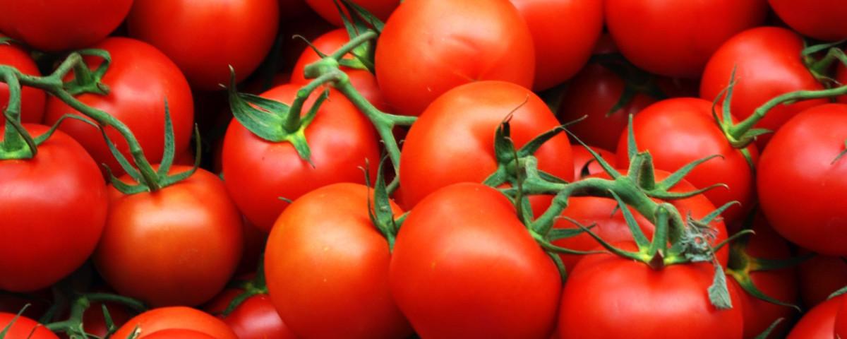 На смену турецким помидорам придут астраханские томаты