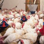 Агрохолдинг «Евродон» расширяет свое производство