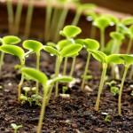 Новое открытие томских ученых в помощь сельскому хозяйству