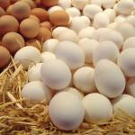 Камчатка будет полностью обеспечена куриным яйцом