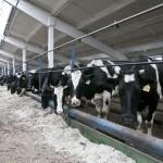 Бурятия обзаводится новыми молочнотоварными семейными фермами