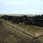 В Хабарлинском районе Астраханской области будут разводить телят абердино-ангусской породы