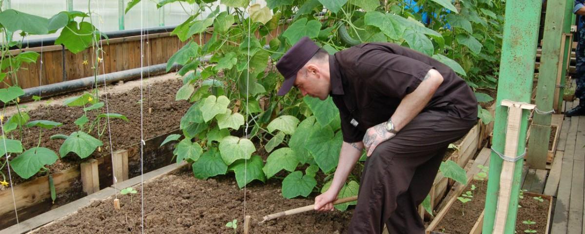 Заключенные уральских колоний выращивают сельскохозяйственные культуры
