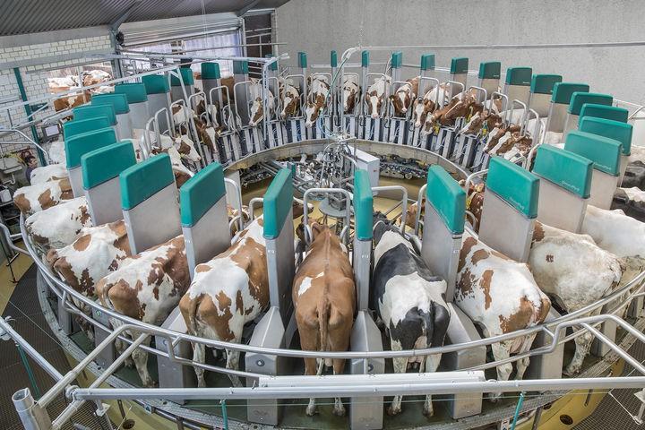 На ферме в Калужской области за животными ухаживают роботы