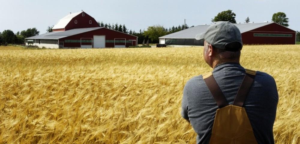Североосетинские сельхозпроизводители получили хорошую государственную поддержку