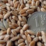 Правительство РФ выделяет Челябинской области 300 миллионов рублей на развитие сельского хозяйства